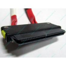 SATA-кабель для корзины HDD HP 451782-001 459190-001 для HP ML310 G5 (Ижевск)